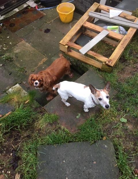 Bailey and Lloyd