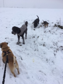 LtoR: Buster, Echo, Tia, and Basil.
