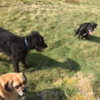 Buster, Echo and Tia